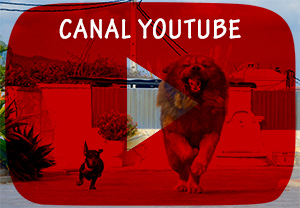canal video